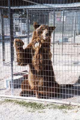 Bear Enclosure/Cages