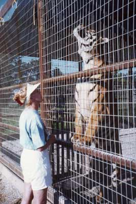Big Cat Enclosures/Cages